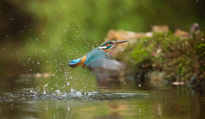 nature photography competition australia Photoh improve your photography tips