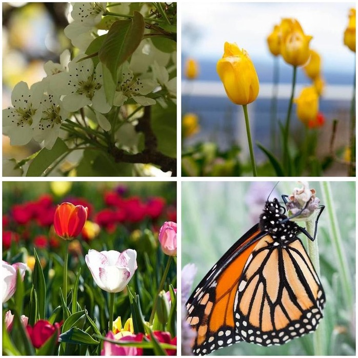 Photography Competition 17: Spring/Nature Photography Montage