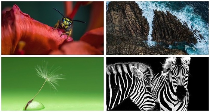 Photography Challenge 84: Nature Photography Montage