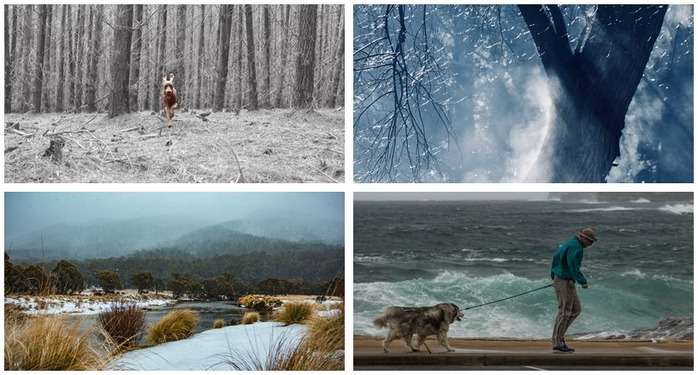Photography Challenge 87: Winter Photography Montage