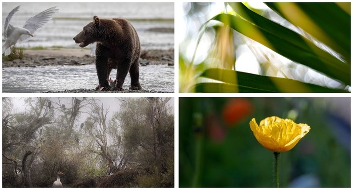 Photography Challenge 95: Nature Photography Montage