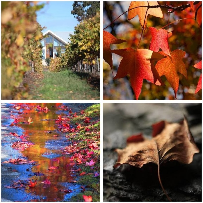 Photography Competition 32: Autumn Photography Montage