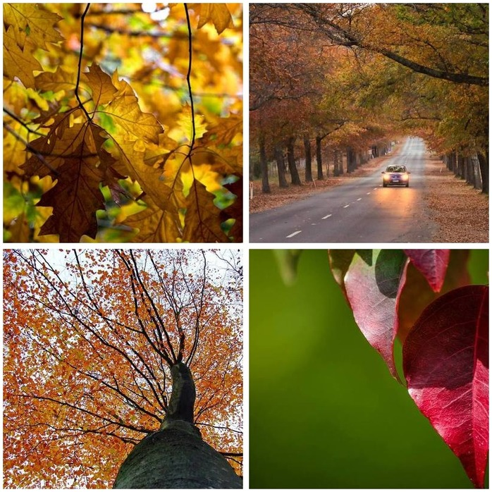 Photography Competition 57: Autumn Photography Montage