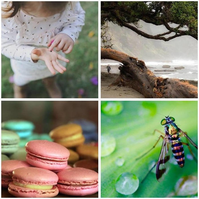 Photography Competition 62: Open Theme Montage