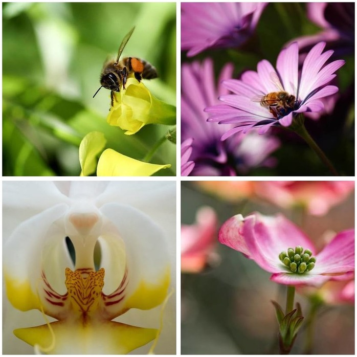Photography Competition 68: Spring Macro Photography Montage