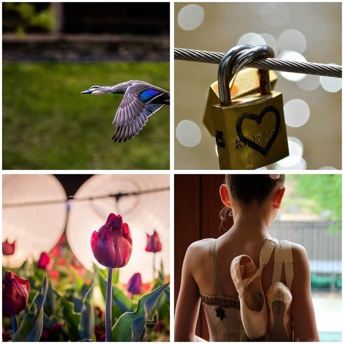Photography Competition 69: Open Theme Montage