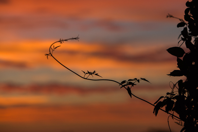 sunset photography tips how to alli harper  - Tips for Sunset Photography